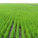 Científicos chilenos desarrollan asistencia virtual para agricultura