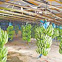 Comisión de la Ley 25 de Transformación Agropecuaria aprueba 4 nuevas normativas