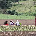 FAO y Alianza Cooperativa por una agricultura sostenible e inclusiva