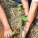 Cuando crece un árbol virtual plantamos uno real