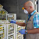Examinan importancia y beneficios de la creación de un hub alimentario