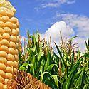 El sector Agro demanda acciones concretas