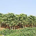 Avanza Plan Maestro del Sector Agropecuario Occidental