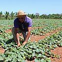 Sector agropecuario aporta su visión sobre alimentación y agricultura a la FAO