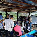 Productores de Coclé amplían conocimientos en manejo reproductivo de ganado bovino