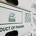 Panamá Exporta Piña a Dubái tras participación en feria de frutas de Berlín