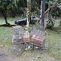 29 aves de diversas especies fueron rescatadas en Herrera