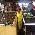 Mesa de diálogo busca poner fin a paralización laboral en las bananeras de Bocas del Toro