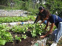 Paz en Colombia necesita sólidas instituciones agrícolas dice FAO