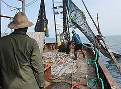 Producción agrícola y pesquera en América Latina crecerá 17 en 10 años FAO
