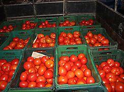 Más de 50000 balboas para productores de tomate de Chiriquí
