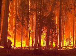 3 mil 472 incendios de masa vegetal se registraron en todo el país hasta noviembre del 2017