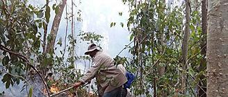La agricultura comercial altera el rol de los incendios salvajes