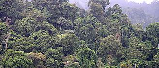 Los bosques tropicales dejaron de ser sumideros de carbono