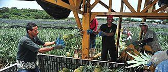 Control de plagas en frutas garantía de salud