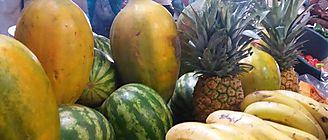 Implementaran la carrera de Técnico en Fruticultura