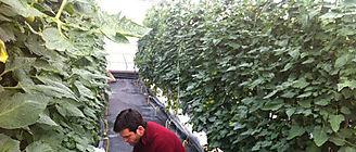 Una aplicación móvil para controlar el riego en los invernaderos