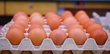 Cómo conseguir huevos de gallina más resistentes y saludables