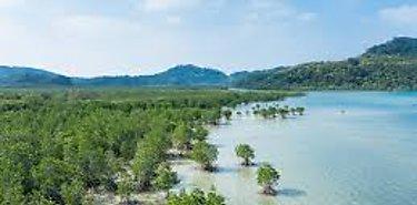 Empleos verdes futuro del país expone ministro de Ambiente