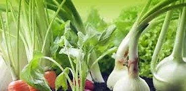 Panamá asiste a seminario sobe mercados agrícolas