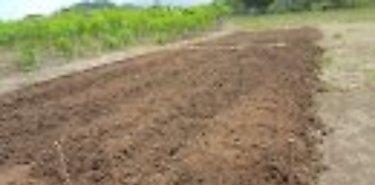 MIDA presenta resultados obtenidos de huerta de agricultura familiar