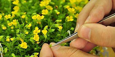 Cómo decide una planta si crecer o entrar en modo ahorro