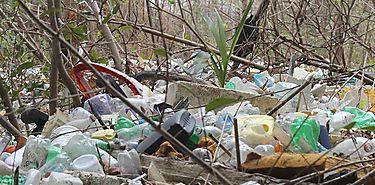 Panameños colaboran con la limpieza de los Manglares
