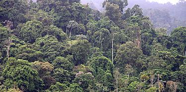 Realizan monitoreo de biodiversidad en cuatro parques nacionales