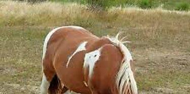 Seminario sobre bienestar animal en equinos