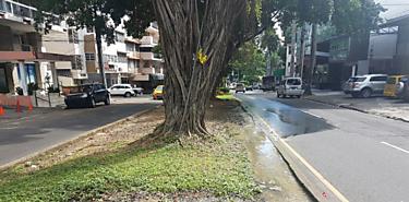 UABR anuncia tala de árboles enfermos