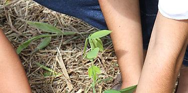 Gran Día Nacional de Reforestación se realizará el próximo 2 de junio