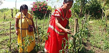 Ngäbes principal fuerza laboral en la producción agrícola asegura Mediano Productor del Año