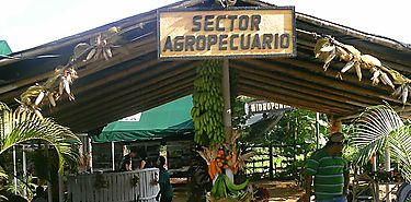 Profesionales realizan juzgamiento a productos agrícolas en Feria de La Candelaria