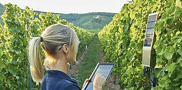 Uso de la informática invade la producción agrícola