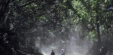 Economía verde podría aumentar empleo en Latinoamérica y Caribe