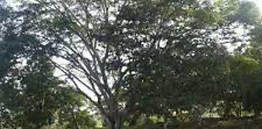 Proyectos agropecuarios en Los Santos dan óptimos resultados