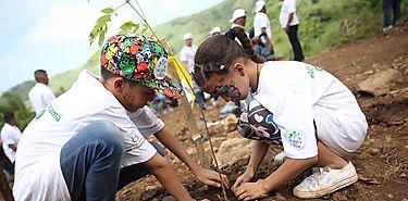 Forestación aumenta existencia de carbono en el suelo indica investigación