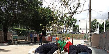 Alcaldía de Panamá presentan avances del Plan de arborización de la Ciudad