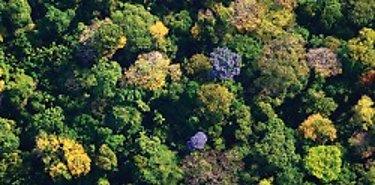 La interrogante de la biodiversidad tropical
