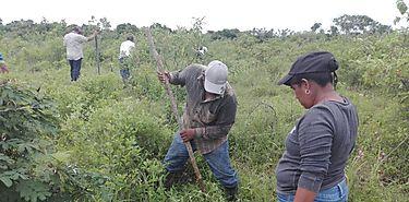 Ganaderos de Coclé participan de jornada silvopastoril