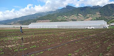 Internacionalizar agricultura familiar es clave para desarrollo rural de Latinoamérica y el Caribe dice FAO