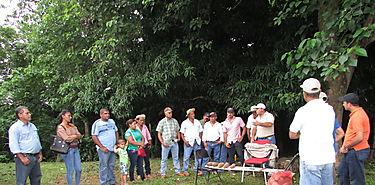 Intensifican producción de ñame en Los Santos