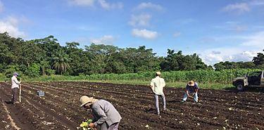 La FAO y la UIT buscan apoyar la innovación en la agricultura