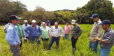Programa de Transformación Agropecuaria capacita a productores de Chiriquí