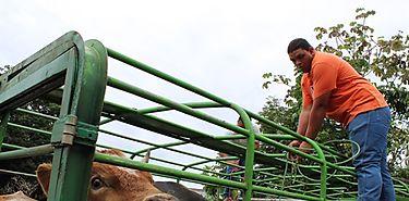 Crean guía de ganaderos de Chiriqí para controlar robos de ganado