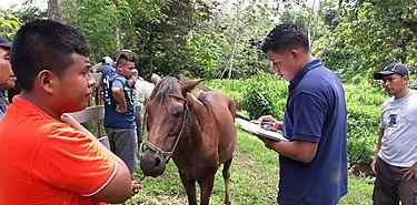 Salud Animal mejora calidad de vida de equinos de trabajo
