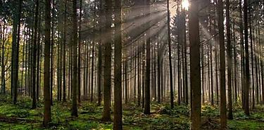 Bosques sostenibles alternativa de protección al planeta