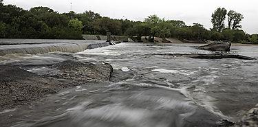 Antidepresivos y fungicidas alteran la vida de los animales de río
