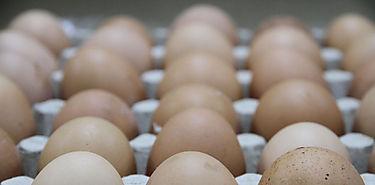 Producción de huevos aumenta 22 millones en 2016