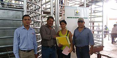 MIDA distribuye sementales lecheros a pequeños ganaderos chiricanos